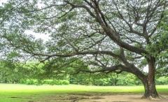 Votez-pour-le-plus-bel-arbre-de-l-Union-europeenne_width1024.jpg