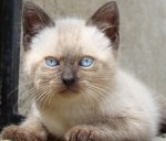 Un beau chat.jpg
